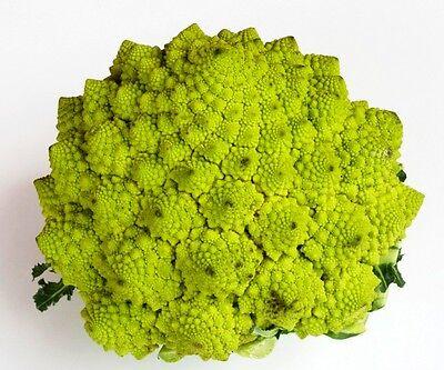 100 Cavolo broccolo ROMANESCO NATALINO semi sementi seeds orto ortaggio verdura
