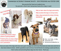 Gananoque & District Humane Society - DOG PROGRAM & FOSTER CARE