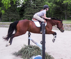 One on one riding lessons- October discount Peterborough Peterborough Area image 6
