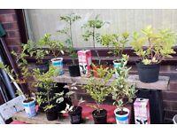 GARDEN PLANTS/SHRUBS/TREES