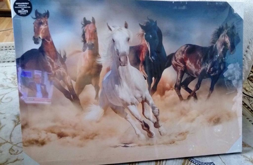 Brand new horse canvas picture