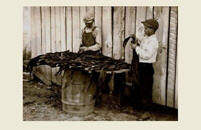 1916 Children Tobacco Workers PHOTO Child Labor, Kentucky Kids Farmers Stripping
