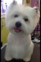 Award Winning Pet Grooming in Truro