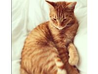Loved ginger cat Oscar missing from Sefton Park area since 31st July