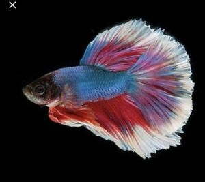 Looking to re-home your fish?