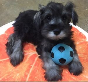 THE TOP DOG STORE - WE FIND FAMILIES FOR PUPPIES!