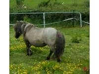 Very quiet mare