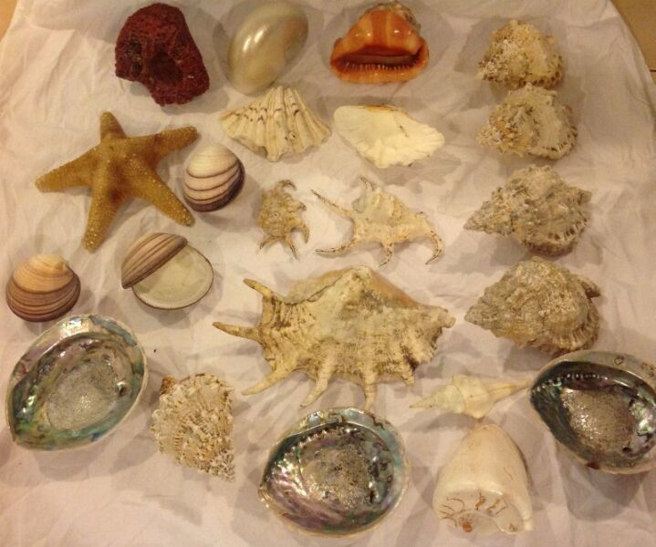 Shells for sale - non trade items - one off sale