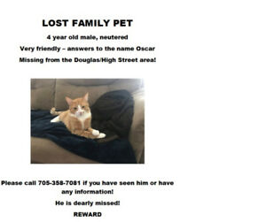LOST FAMILY PET