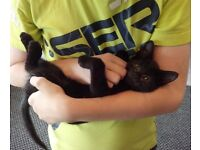 Kittens awaiting new homes, 10 weeks old.