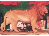 Resin lion heavy