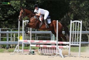 Honest and Talented Eventer Maudsland Gold Coast West Preview