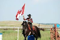 Do you own a CANADIAN HORSE - Look Here!