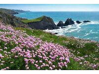 CHEAP DEVON & CORNWALL HOLIDAYS - BEACHES - 2 POOLS- SURFING- ENTERTAINMENT - WALKS - DOGS WELCOME