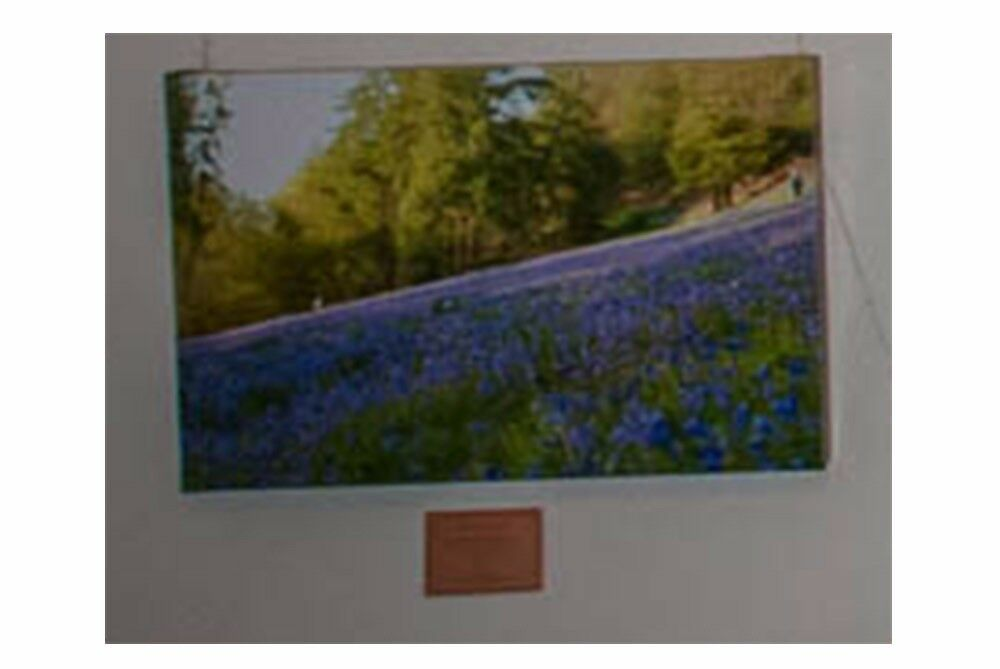 780x480 Canvas Print, Bluebells