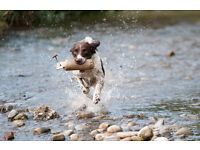 Experienced & Friendly Dog Walker Co Antrim