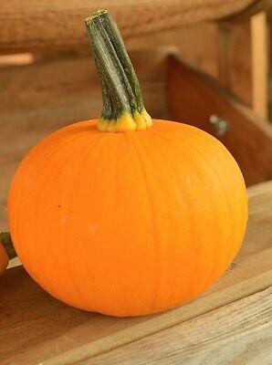 25 Pumpkin Seeds Kandy Korn Plus Pumpkin Candy Corn Pumpkin Hybrid HARD TO FIND - Kandy Korn