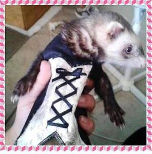 Ferret Vests & Corsets - NEW Greenwood Joondalup Area Preview