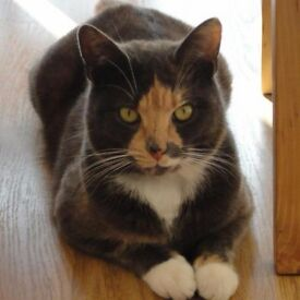 Cat missing in Haydock since Sunday 29th October