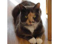 Cat missing in Haydock since Sunday 29th October
