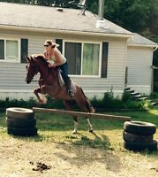 Well broke grade Morab gelding