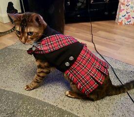 Pet kilt. Dog cat outfit costume