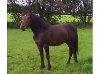 Horse - for sale