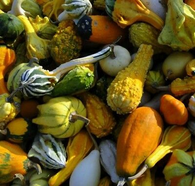 Mixed Ornamental Gourd Seed - Hard & Soft Shelled Gourds Seeds (1gr to -