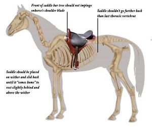 Equine Body Work - VR, Massage, Saddle Fit, Sheath cleaning