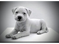 Dog Photography Margate Canterbury