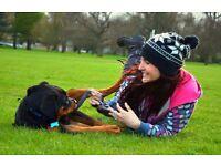 Dog Walker / Dog Walking Available Maidstone £10