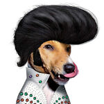 Hound Dog Dudz