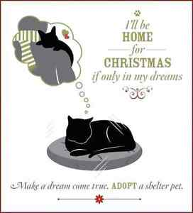 A home for Christmas  , cat's an dog's an uther pet's Edmonton Edmonton Area image 3