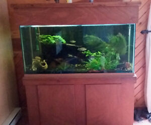 Well-established 90gal fish tank and accessories