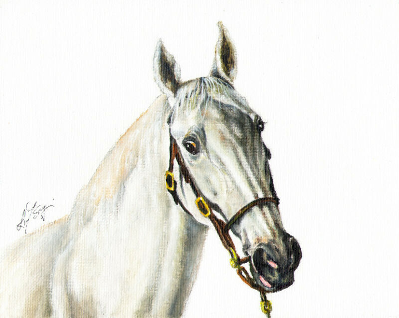 Original Oil HORSE Portrait Painting PONY Artwork SIGNED Gray Stallion Grey