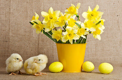 Egg carton daffodils are simple and stylish