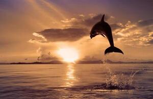 """Big Beautiful 28""""x42"""" High Definition """"DOLPHIN JUMPING"""" Picture."""