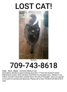 LOST CAT.  black female, small around 5 or 6 lbs.