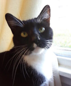 Donna. Playful, Curious Rescue Cat Seeks Forever Family