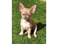 Dogs for sale in Birmingham, West Midlands - Gumtree