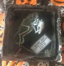 Taxidermy mummified brown rat gothic goth frame curiosity