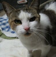 Angel young female kitten cat spayed