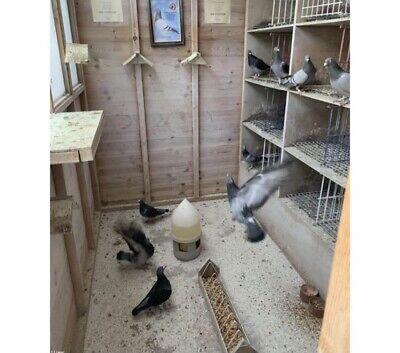 Pigeon Lofts Part 1, Racing Pigeon Dvd