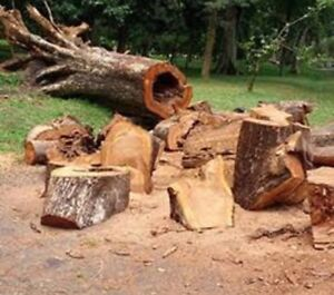 Daniels tree lopping and stump grinding service