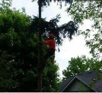 Louie Tree Service
