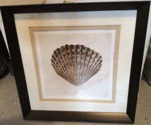 Shell framed picture