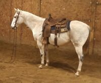 12 YEAR OLD-15.1 HAND AQHA REGISTERED HEAD HORSE,RANCH HORSE