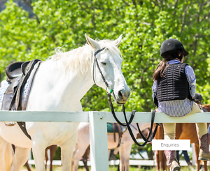 Share in farm: free horse riding Blue Mountains Preview
