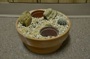 Variety of terra cotta  & plastic bowls for plants Strathcona County Edmonton Area image 3