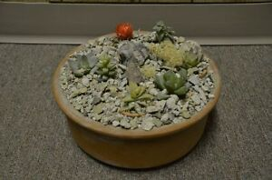 Variety of terra cotta  & plastic bowls for plants